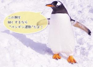 ペンギン運動